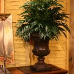 Palm in Urn
